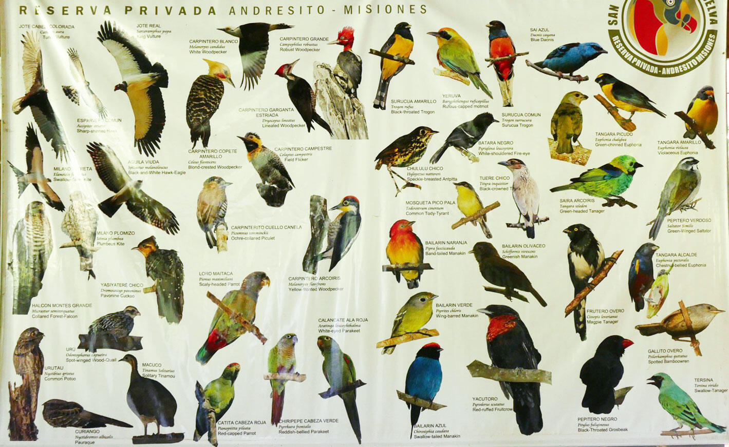 New World Record Set For Most Species Of Birds Seen In One