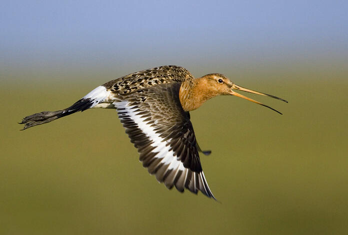 Climate Change Shifts Bird Migration One Generation At A