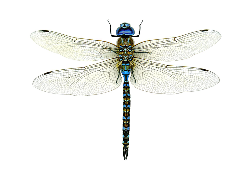 Dragonfly on green leaf 50869 - Animal Collection - Animal