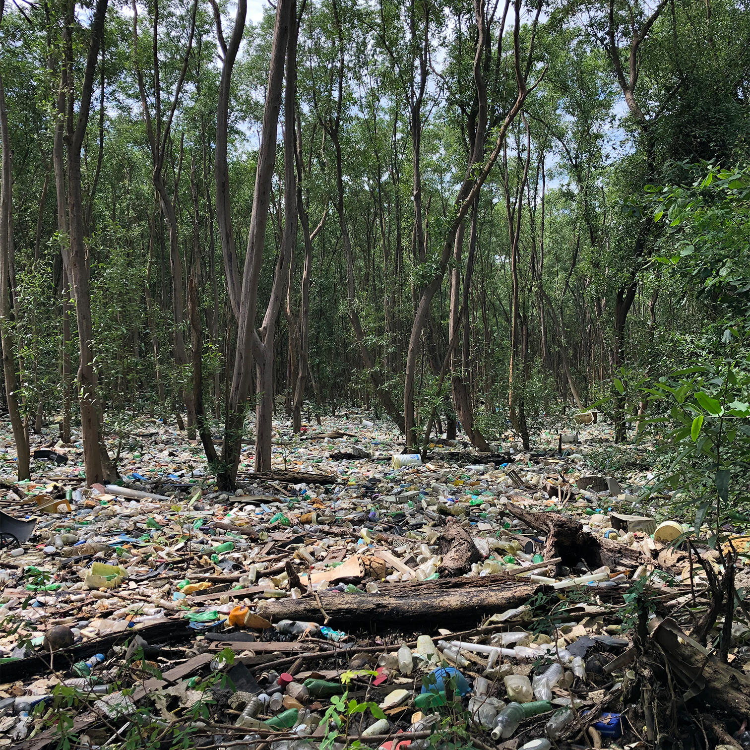 Photograph of plastic pollution in a mangrove ecosystem in the Bay of Panama