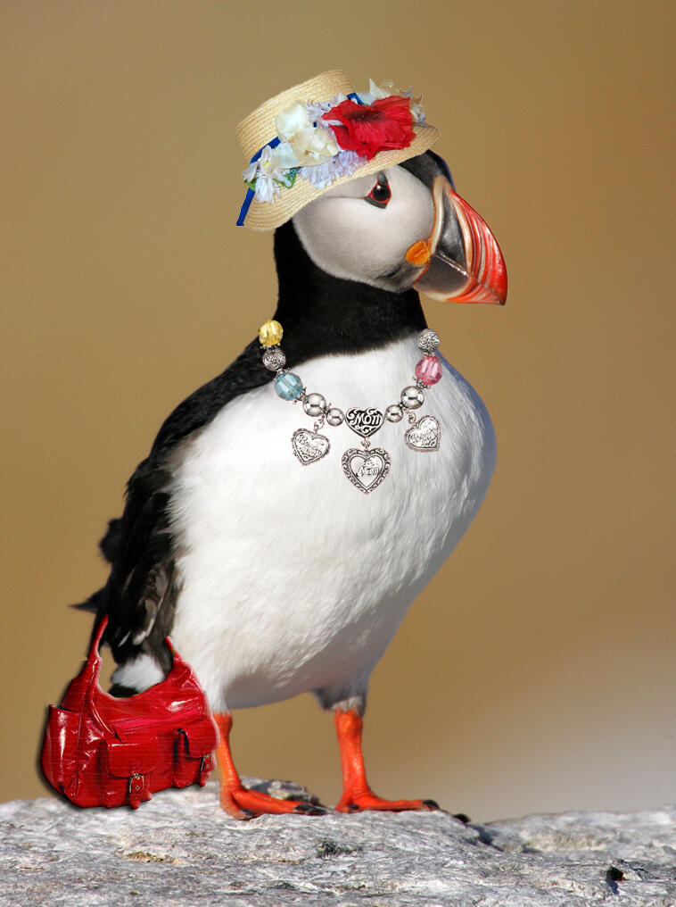 Celebrate Mother S Day With Puffins Audubon