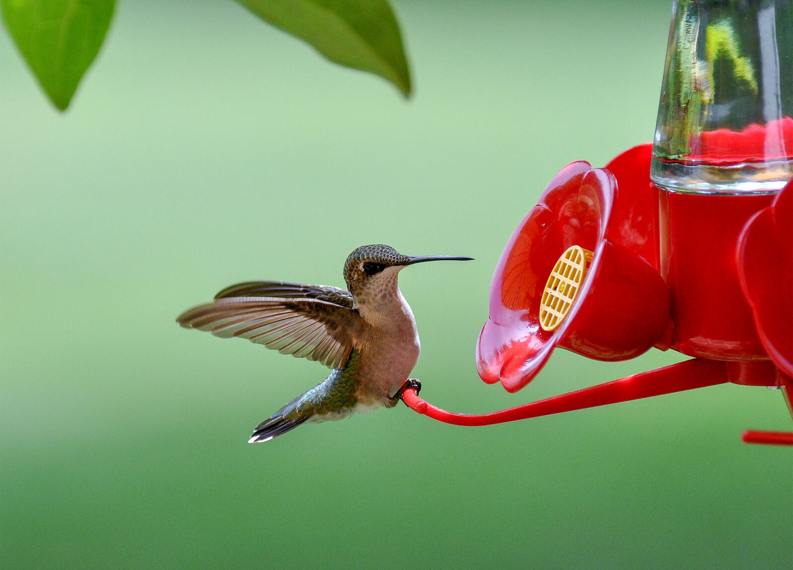 How To Keep Your Hummingbird Feeder Free From Pests Audubon