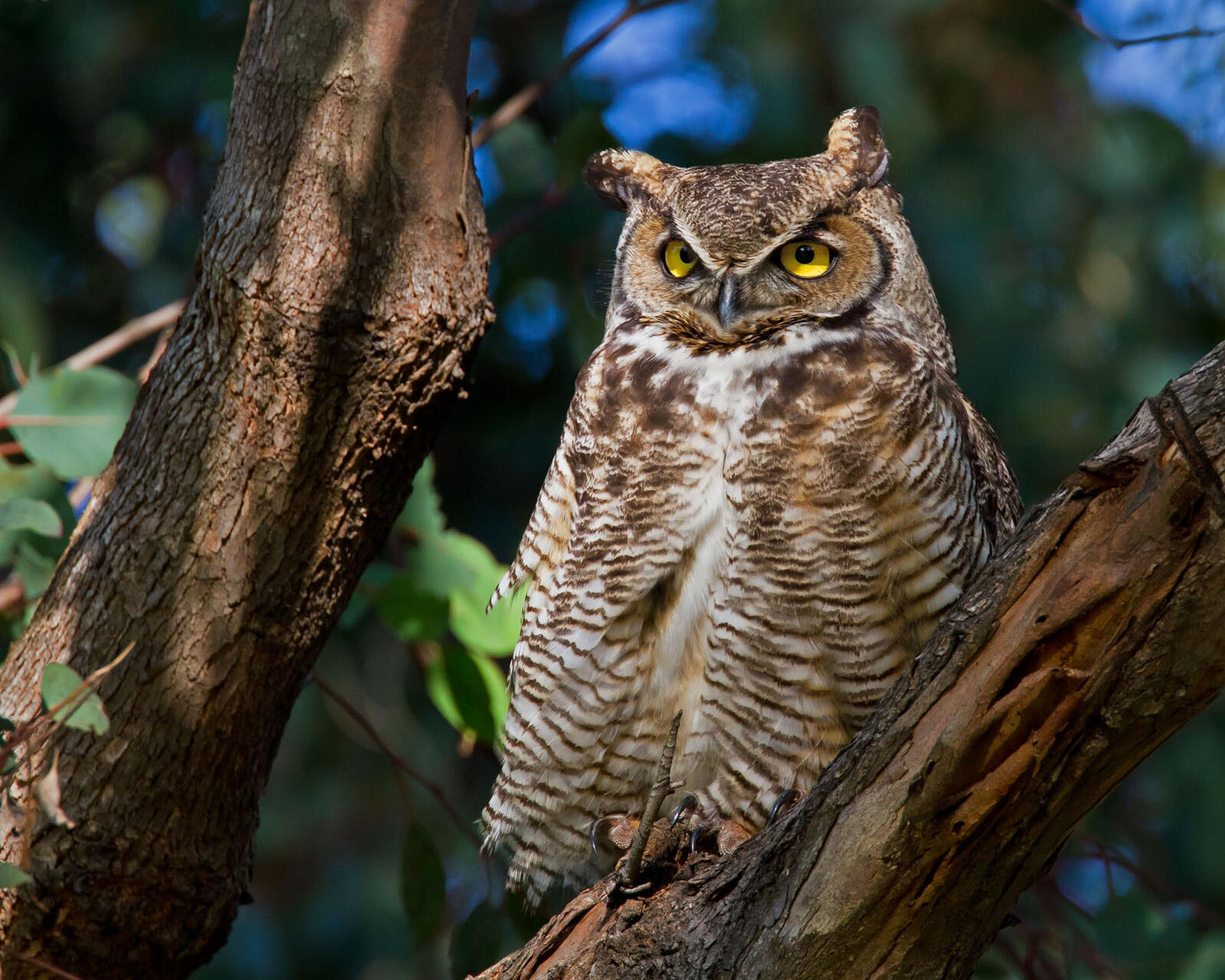 Learn to Identify Five Owls by Their Calls | Audubon