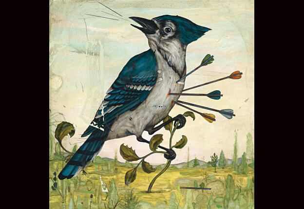 Slings and Arrows: Why Birders Love to Hate Blue Jays | Audubon