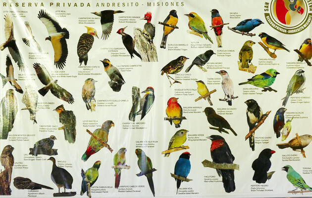 The Species List