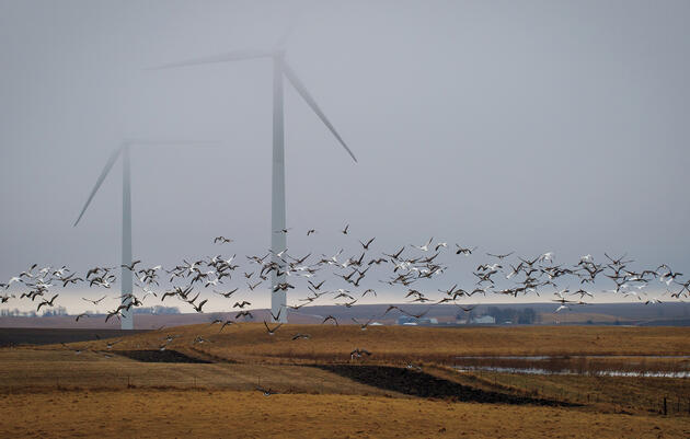 Audubon's Position on Wind Power