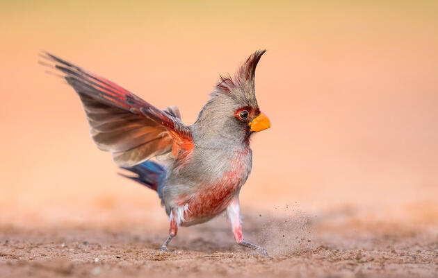 Audubon Photography Awards Frequently Asked Questions