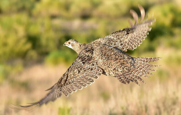 Audubon Welcomes Senate Passage of Bird-Free Defense Authorization Bill