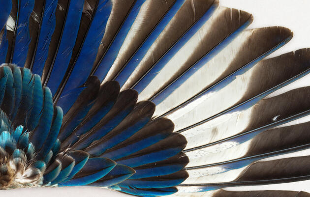 Behind the Scenes of the World's Largest Bird Wing Collection