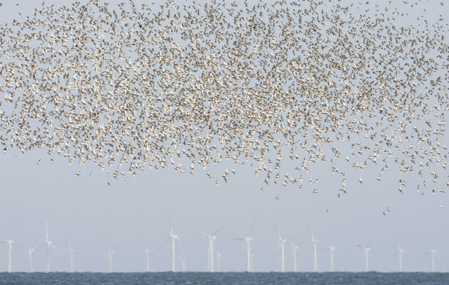 World's Biggest Offshore Wind Farm Could Shape Seabird Behavior