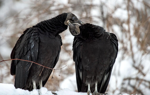 Till Death Do Them Part: 8 Birds that Mate for Life
