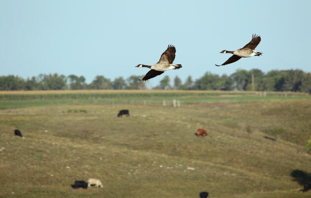 For Ranchers: FAQs on Audubon's Conservation Ranching Program