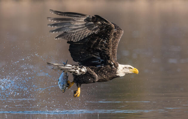 17 Former Federal Officials to Zinke: Don't Change the Migratory Bird Treaty Act