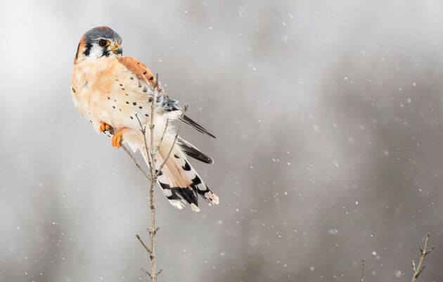 Audubon Invites You to Join the 119th Annual Christmas Bird Count