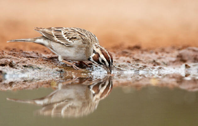 50 Years Later, America's Breeding Bird Survey Keeps Delivering New Insights