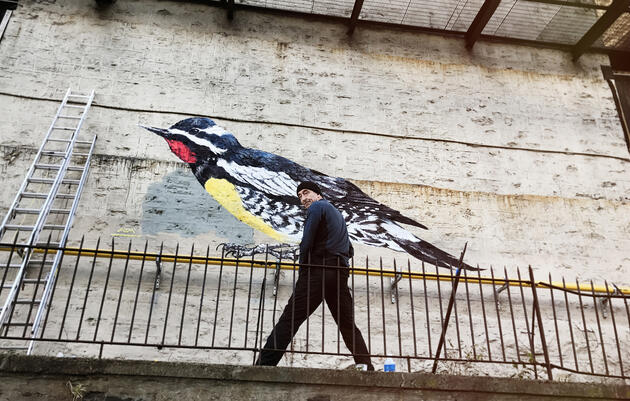 Meet the London Street Artist Who Painted Bird Murals All Over Harlem