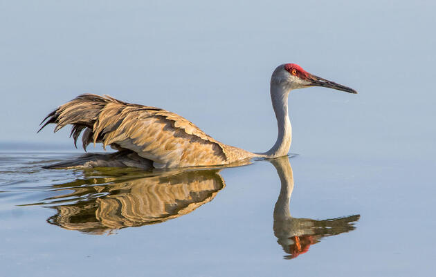Top Audubon Wins for Birds in 2019: Historic Agreements and Protected Habitats