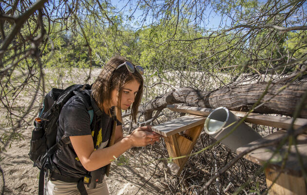 Arizonans Are Helping a Desert Warbler Expand Its Housing Options