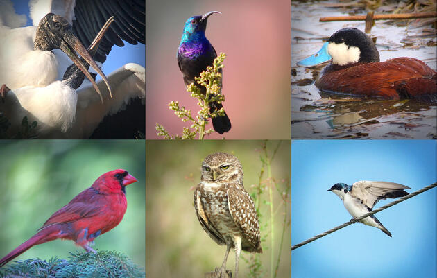 How to Hack Your Smartphone to Take Good Photographs of Birds