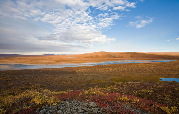 Final Plan for Arctic Refuge Drilling Could Cause Extinctions, Admits Government