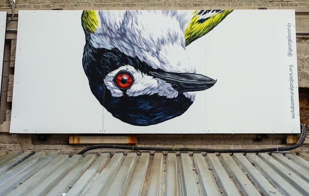 The Audubon Mural Project Paints a Milestone 100 Species