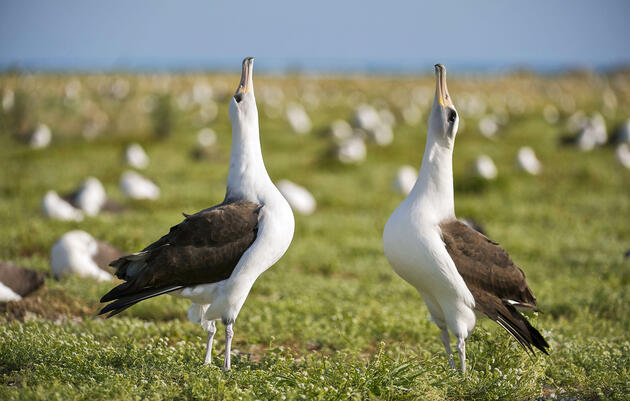 10 Outrageous Ways Birds Dance to Impress Their Mates