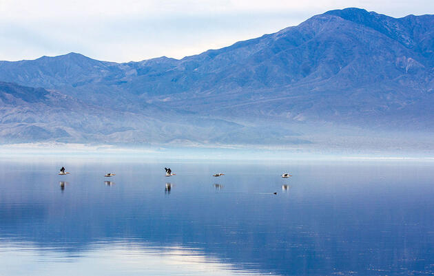 Executive Summary—Water and Birds in the Arid West: Habitats in Decline