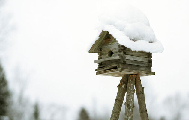 Winterize Your Yard for Birds