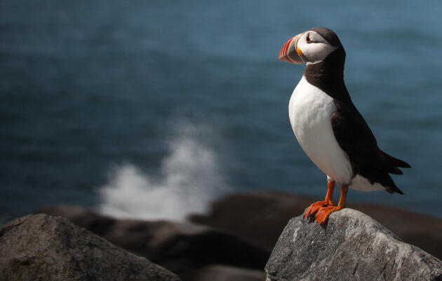 Court's Decision to Uphold Marine National Monument is a Win for Seabirds