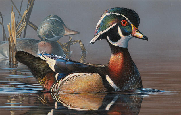 Hunting Imagery May Soon Be Mandatory for Federal Duck Stamp Contest