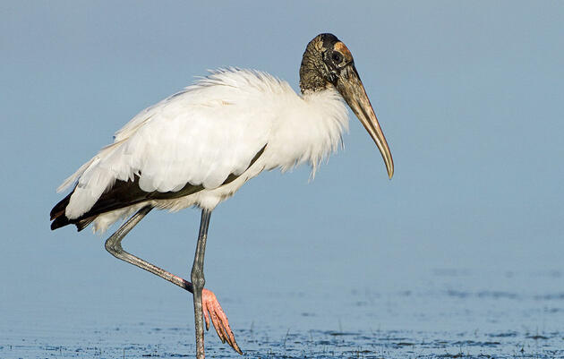 New Trump Administration Water Rule Puts Bird Habitat in Jeopardy