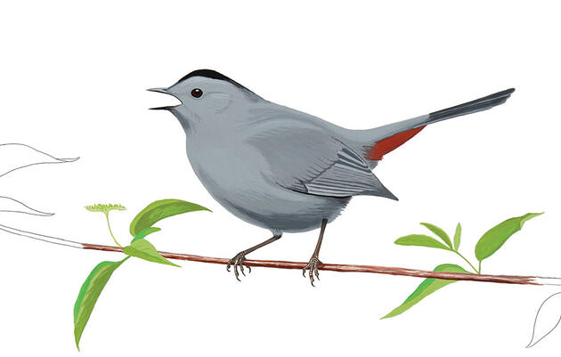 The Catbird Has a Simple Trick to Outsmart Deadbeat Brood Parasites