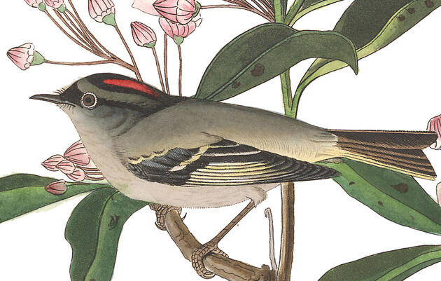 John James Audubon: Crazy, Wrong, or Neither?