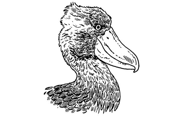 The Shoebill: Or, the Most Terrifying Bird in the World