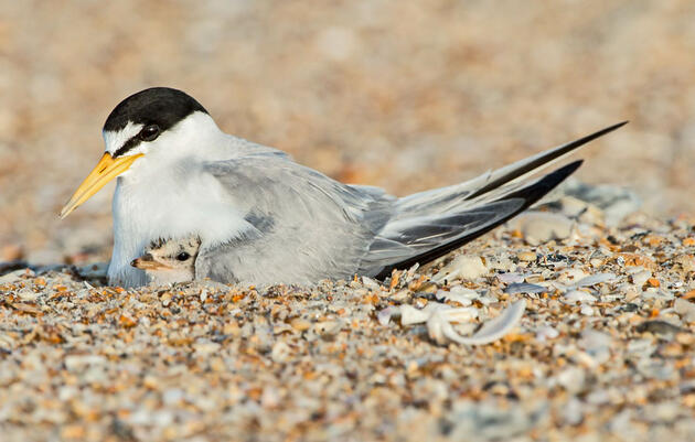 Audubon Opposes Removal of Protections for Coastal Areas