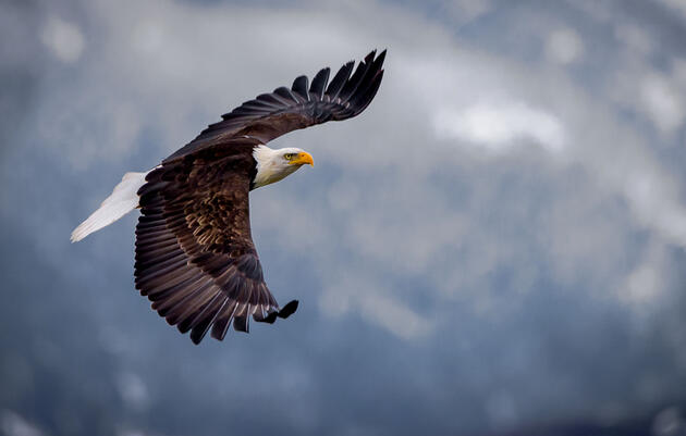 New Endangered Species Act Rules Will Weaken Protections for Birds and Other Imperiled Wildlife