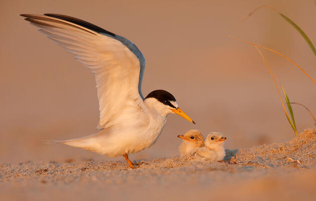 Coastal Stewardship Is Helping Gulf Birds Recover