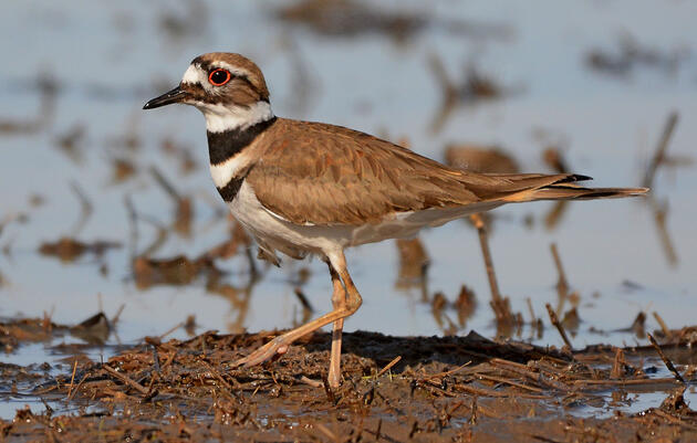 Five Audubon Chapters Awarded with Western Water Grants