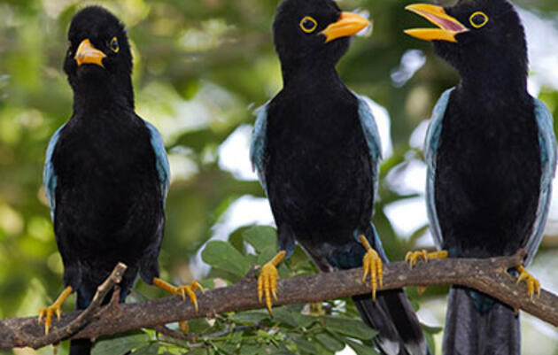 6 Nearby Tropical Birding Hotspots to Escape to This Winter