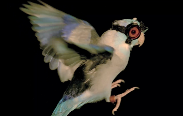A Tiny Parrot Wearing Goggles Is Teaching Scientists How Birds Fly