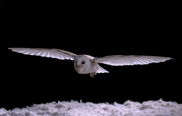 How Do Barn Owls Fly So Silently?
