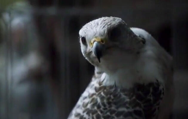 How 'Game of Thrones' Gets Packed With Birds (and Not Just Ravens)