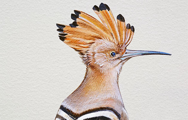 A New Book Illustrates the Story of Birds on Every Continent