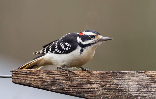 Get to Know These 15 Common Birds