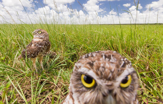 How Photographer Mac Stone Got This Shot of Burrowing Owls