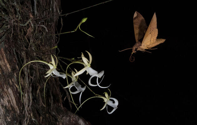 These Photos Reveal the Pollination Secrets of Florida's Most Elusive Flower