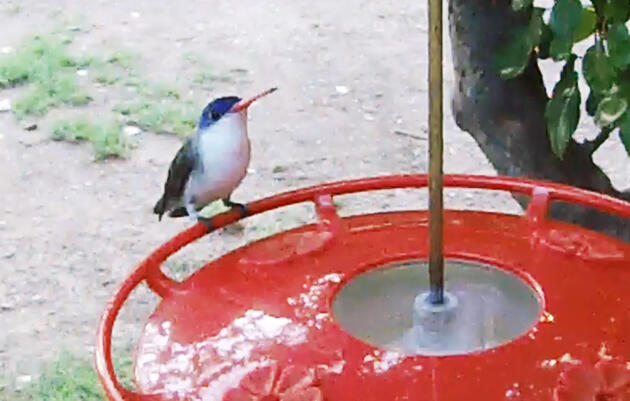 Patagonia, Arizona: Hummingbird Feeder Webcam
