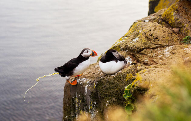 The Surprising Way Seabird Poop Helps Keep the Arctic Cool