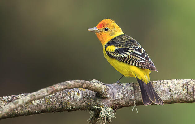 Audubon Secures Important Water Right That Supports Birds and People