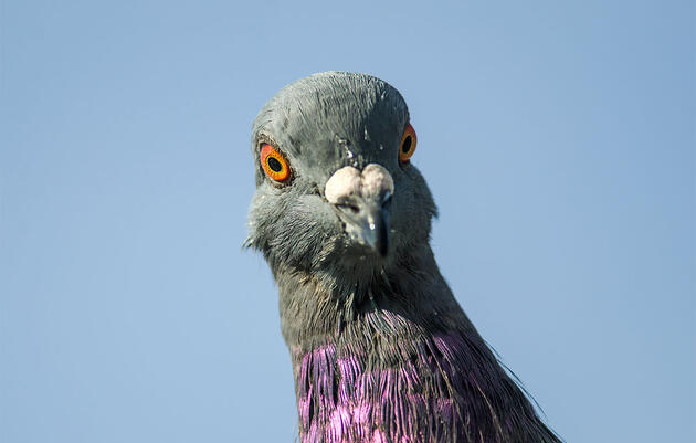 "We Should Definitely Call Pigeons ""Rock Doves"" Again"